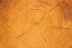 Circle lines of log Stock Image