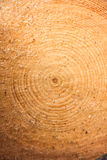 Circle lines of log Stock Photography