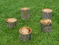 Circle of log seats on grass. Royalty Free Stock Photos