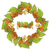 Circle ornament with highly detailed hand drawn hazelnuts Royalty Free Stock Image