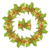 Circle ornament with highly detailed hand drawn hazelnuts Stock Photography