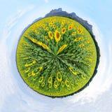 Circle panorama of Sunflower field Stock Image