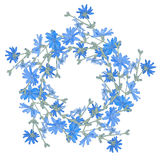 Circle pattern with chicory. Round kaleidoscope of flowers and floral elements Royalty Free Stock Images