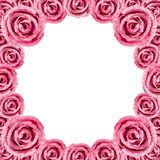 Circle Pink Rose Frame Stock Images