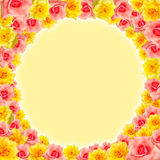 Circle Pink & Yellow Rose Background. Frame Of Pink & Yellow Rose with Yellow Background Stock Photography