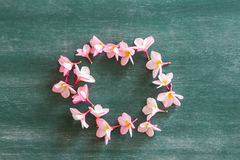 Circle of plumeria on chalkboard Stock Images
