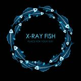 Circle of X-ray fish. On black background with copy space Royalty Free Stock Photos