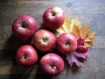 Beautiful red apples from the fall garden royalty free stock photography
