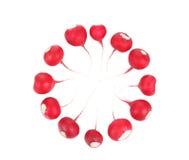 CIrcle from red radish. Stock Photos