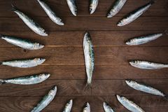 Circle from sardines Stock Photography