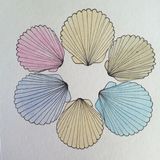 Circle of Sea Shells pen and ink drawing Stock Images