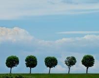 Circle Shaped Trees Royalty Free Stock Photos