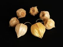 Circle of Tomatillos/Physalis Stock Photos