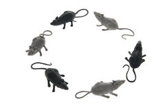 Circle of Toy Rats Royalty Free Stock Photography