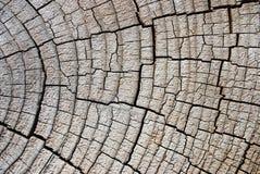 Circle tree Stock Photo