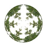 The circle from trees stock photography