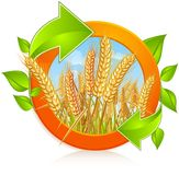 Circle With Ripe Wheat Royalty Free Stock Image