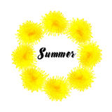 Circle of yellow dandelions Stock Photography