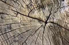Circles on bark of a tree Royalty Free Stock Photo