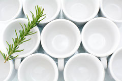 Circles. Circular cofee cups and rosmary on top Royalty Free Stock Photo