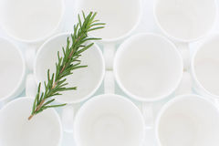Circles. Circular white cups with rosmary Royalty Free Stock Photo