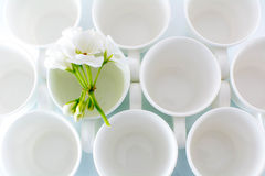 Circles. Empty Coffee cups  with white flower Royalty Free Stock Photos