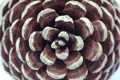 Pine cone structure. Topview shot of a pine cone in detail showing its natural structure Royalty Free Stock Photo