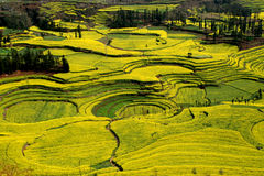 Circles of rape flowers field. At leping of yunnan in china, the circle shape of rape(cole) flowers field Stock Photo