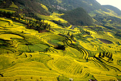 Circles of rape flowers field. At leping of yunnan in china, there're lots of circle shape rape fields Stock Photo