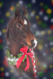Circles and stars in a festive, seamless gold and white pattern. Christmas Horse - wearing a wreath and a bow, surrounded with colorful bokeh on dark background Stock Photography