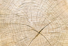 Circles on a tree stump, wood texture Royalty Free Stock Images