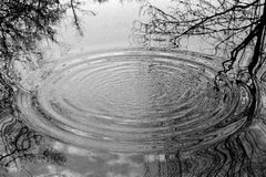 Circles of water. Surrounded by reflections of trees. Taken in upper Austria (Europe) on black/white-film Stock Images