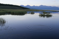 Circles on water Stock Images