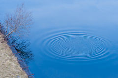 Circles on the water Royalty Free Stock Image