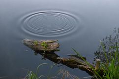 Circles on the water surface royalty free stock photography
