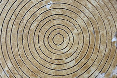 Circles in wood Stock Images