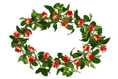 Circlet of flowers, red with white roses and green leaves. Isola. Ted, white background Royalty Free Stock Photography
