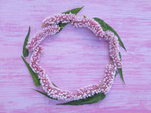 Circlet of pink bistort flowers. On the violet rough painted wooden background Royalty Free Stock Photos