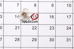 Circling the date Planning of pregnancy calendar royalty free stock image
