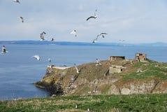 Circling Gulls Royalty Free Stock Image