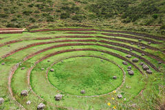 Circlular terrasser för rund inca royaltyfri bild