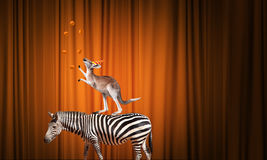 Circo in città Fotografia Stock Libera da Diritti