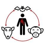 Circolazione del virus di Ebola in natura ed il modo della trasmissione a illustrazione di stock