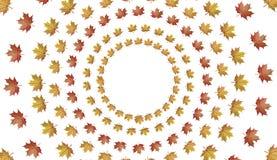 Circondi dalle foglie di acero di autunno isolate su fondo bianco Illustrazione di Stock