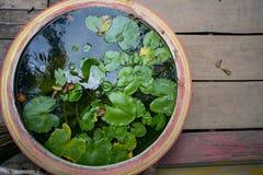 Circondi il vaso dell'argilla - un piccolo stagno con nenuphar verde Fotografia Stock Libera da Diritti