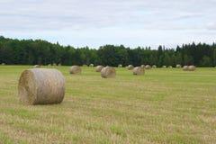 Circondi la balla di fieno in paglia rurale del prato del paesaggio dell'agricoltura dell'azienda agricola del campo Immagine Stock Libera da Diritti
