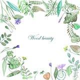 Circondi la struttura degli elementi, delle foglie, dei rami e dei wildflowers floreali illustrazione di stock