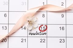 Circonduzione della data che prova ad avere calendario del bambino fotografia stock