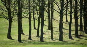 Circuiti di collegamento di albero Immagine Stock Libera da Diritti