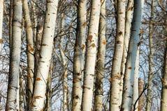 Circuiti di collegamento di albero di inverno immagine stock